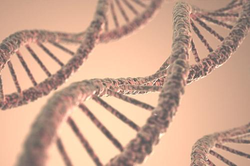 Scoperto gene chiave nella identificazione dei DTN