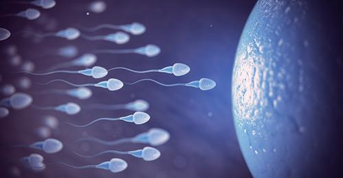 Quando ho l'ovulazione?